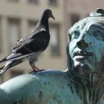 ultrasuoni per piccioni
