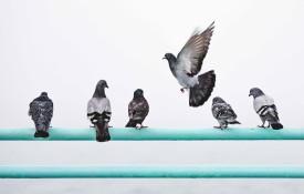 dissuasori per piccioni ad ultrasuoni